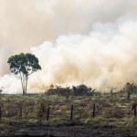 Brazilian Amazonia Burning — Stock Photo #51305293