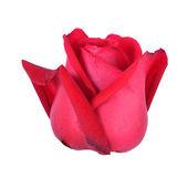 孤立在白色背景上的红玫瑰 — 图库照片