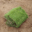 New grass, planting new sod grass in the garden — Stock Photo