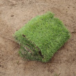 New grass, planting new sod grass in the garden — Stock Photo #50198689