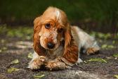 Lovely dog — Stock Photo