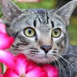 Cat thailand — Stock Photo #49291023