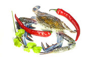 Blue crab, giant freshwater lobster and red hot chillies isolateed on white background — Stock Photo