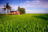 Traditional Malay House in Sekinchan Paddy Field — Stock Photo