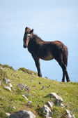Black horse in the mountain with the sky behind — Foto Stock