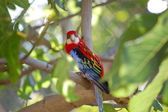 Colorful parrot on a tree — Stock Photo