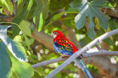 Parrot standing on the branch of a tree — Stock Photo