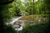 River, forest — Stock Photo