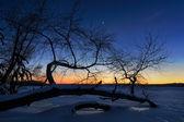 Tree of frozen river — Stock Photo