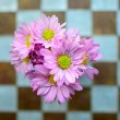 Pink flower on the chess pattern wall — Stock Photo #50623217