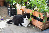 Black and white cat sitting on a pavement in Brussels, Belgium. — Stockfoto