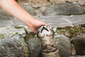 Man is petting tabby cat on a street of Entrevaux, France. — Stockfoto