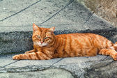 Ginger striped cat sitting on a pavement in Entrevaux, France. — Stock Photo