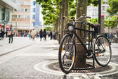 Bike standing near a platan tree in Frankfurt, Germany — Stock Photo