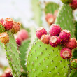 Prickly pear cactus close up with fruit in red color, cactus spines. — Stock Photo #51413103