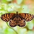 ������, ������: A Heath Fritillary butterfly