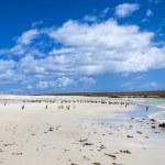 Gento Penguins Colonies at Falkland Islands — Stock Photo #49497953