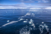 Antarctica sea ice landscape — Stock Photo