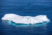 Penguins on a small iceberg in Antarctica — Stock Photo