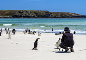 Photographer with penguins at Falkland Islands-3 — Stock Photo