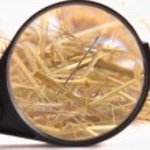Needle in haystack — Stock Photo #49604527