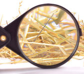 Needle in haystack — Stock Photo