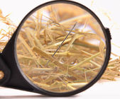 Needle in haystack — Stock Photo