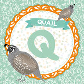 Q is quail. — Stock Vector