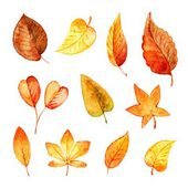 Set autumn leaves watercolor. Vector — Stock Vector