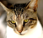Green Eyed Cat — Stock Photo