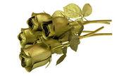 Golden roses isolated on white background — Stock Photo