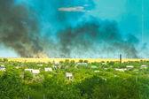 Field Burning — Stock Photo