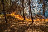 Forest Burning — Stock Photo