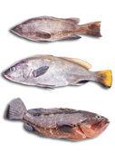Sea fish on the white bacground — Stock Photo