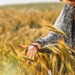 Young woman hand in a wheat field as harvest concept — Stock Photo #49786451