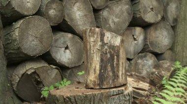 Wood Chop — Stock Video