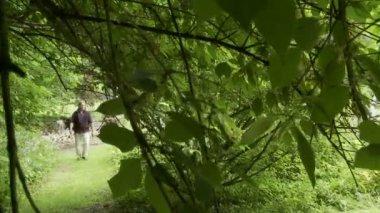 Woodland Walk — Stock Video