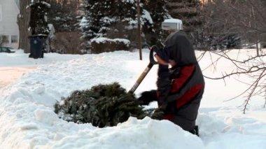 冷冻的树 — 图库视频影像