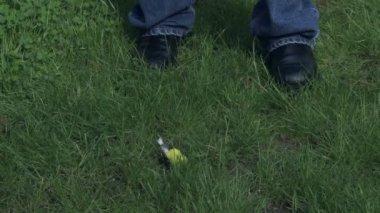 Mrtvý žlutý pták — Stock video