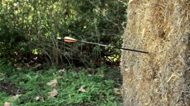 Archery Target — Stock Video