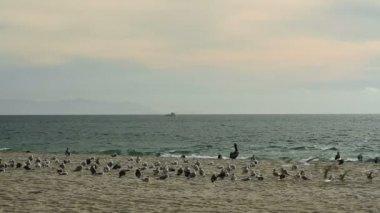 Beach Birds and Jogger — Vidéo