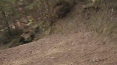 Forest Flight — Stock Video