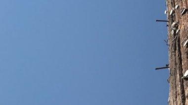 电线杆 — 图库视频影像