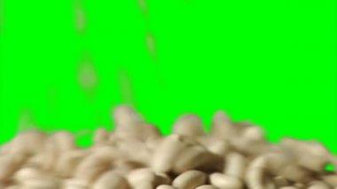 Grande fagioli settentrionale — Video Stock