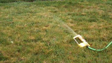 Garden Sprinkler — Stock Video