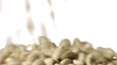 Great Northern Beans on white — Stock Video