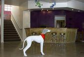 современный отель лобби — Стоковое фото