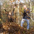 Fall Leaf Raking — Stock Photo #50013325