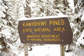 Kawishiwi Pines — Stock Photo