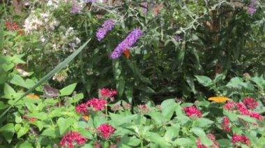Butterfly Garden — Stock Video